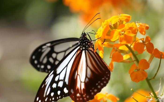 Paesaggi categoria farfalle foto farfalle for Immagini farfalle per desktop